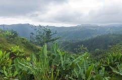 云彩森林和山脉在哈尤亚 免版税图库摄影