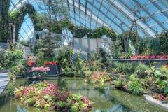 云彩森林,由海湾的庭院 免版税库存照片