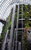 云彩森林-由海湾的庭院 库存照片