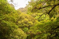 云彩森林 免版税库存照片