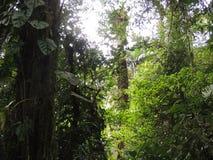 云彩森林 免版税图库摄影