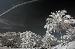 云彩椰子红外照片天空结构树 图库摄影