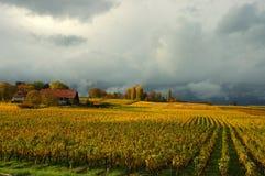 云彩猛冲在葡萄园之下 库存照片