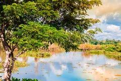 云彩的树和阴影 库存图片