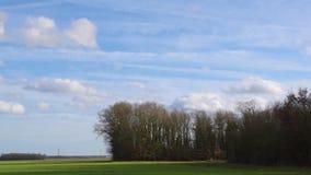 云彩移动在绿色领域和森林的蓝天 股票视频