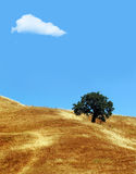 云彩结构树 免版税库存照片