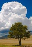 云彩结构树 库存照片