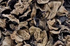 云彩耳朵真菌 免版税库存图片