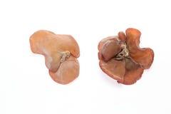 云彩耳朵蘑菇 免版税库存图片