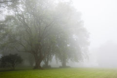 云彩薄雾树 库存照片