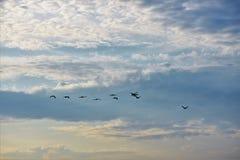 云彩鸟 图库摄影