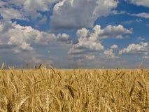 云彩黑麦天空麦子 免版税库存照片