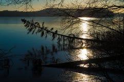 云杉下落和湖 库存照片
