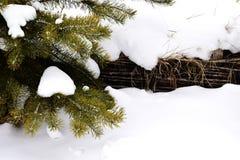 云杉分支在雪的 免版税库存图片