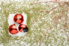 云杉和残破的球干燥分支  免版税库存照片