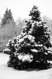 云杉和雪 免版税库存图片
