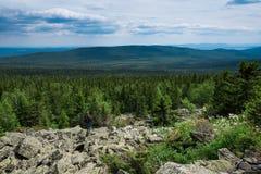 云杉在一个山坡晴天增长 反对背景一个能看到山 灌木使绿色水平的横向早晨剪影夏天结构树模糊 免版税库存照片