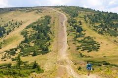 云杉的冷杉森林在乌克兰喀尔巴汗 能承受的清楚的生态系 方向 土路 免版税图库摄影