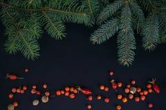 云杉的分支、红色莓果和榛子在黑暗的背景 图库摄影