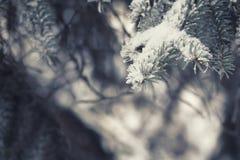 云杉的分支在雪欢乐神奇童话冬天 免版税库存照片