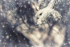 云杉的分支在雪欢乐童话冬天 免版税库存图片