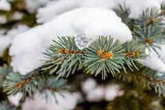 云杉的分支用雪厚实的层数报道 冬天snowstorm_ 免版税库存图片