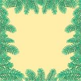 云杉的圣诞树传染媒介分支的框架  库存图片