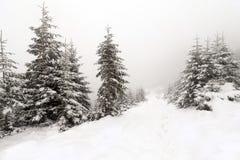 云杉的在冬天风景的雪盖的树有雾的森林 库存图片