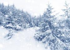 云杉的在冬天风景的雪盖的树有雾的森林 免版税图库摄影