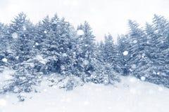 云杉的在冬天风景的雪盖的树有雾的森林 库存照片
