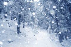 云杉的在冬天风景的雪盖的树有雾的森林 免版税库存图片