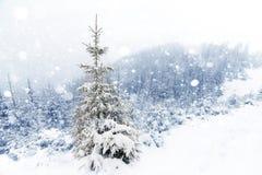 云杉的在冬天风景的雪盖的树有雾的森林 免版税库存照片