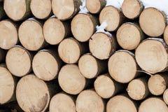 云杉的木头在背景中 免版税图库摄影