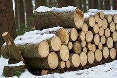 云杉的木头在背景中 库存图片