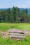 云杉的木材注册的森林,波兰 库存图片