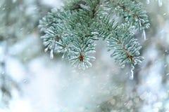 云杉的枝杈 用冰盖的针 背景蓝色雪花白色冬天 库存照片