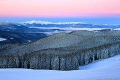 云杉的树冬天森林倾吐了与雪 库存图片