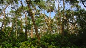 云杉的树和豪华的绿色灌木在bue天空在一个森林里在富兰德 库存照片