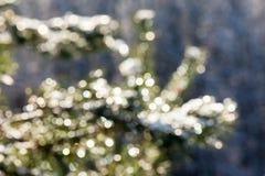 云杉的树在与抽象迷离boke的冬天在阳光下 库存照片