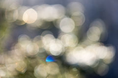 云杉的树在与抽象迷离boke的冬天在阳光下 库存图片