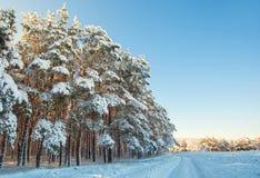 云杉的森林一个美好的积雪的风景  图库摄影