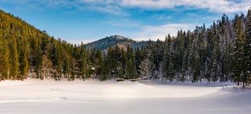 云杉的森林全景冬天山的 库存照片