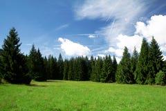 云杉的森林在Sumava国家公园, Sumava,捷克语 库存照片