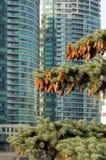 云杉的结构树 免版税库存照片