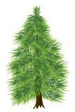 云杉的结构树 库存图片