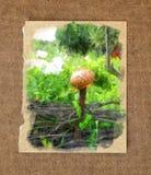 云杉的绿色叶子颜色,一个平安的村庄晴天,明亮 免版税图库摄影