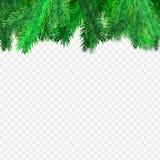 云杉的透明背景 免版税库存照片