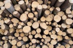云杉采伐木头 免版税图库摄影