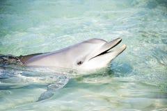 互动与人的微笑的海豚 免版税库存图片