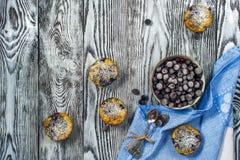 五个松饼有黑醋栗顶视图,水平 库存照片